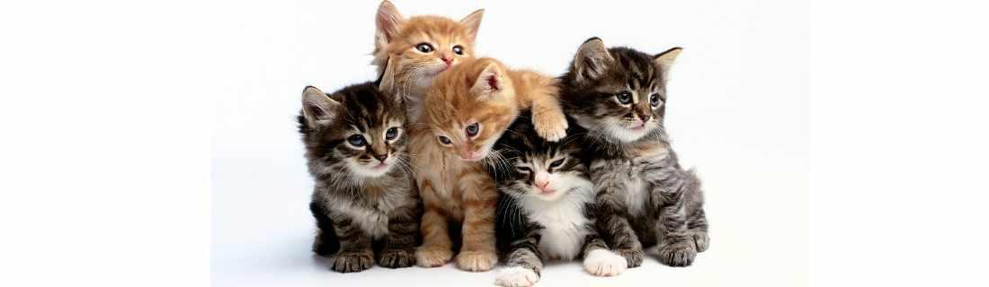 Veterinaria para Gatos